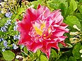Flower Rex 5.jpg
