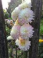 Flowers (004).jpg