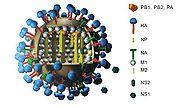 180px Flu und legende color c Bisher genaueste Untersuchung des H1N1 Genoms der Schweinegrippe