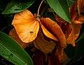 Fly-on-Orange-Flower.jpg