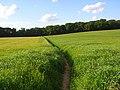 Footpath, Cookham - geograph.org.uk - 857226.jpg