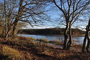 Forest of Tronçais - étang de Pirot (December 2011)