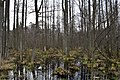 Forest - panoramio (72).jpg