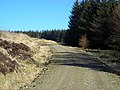 Forest Track Near Little Clyde - geograph.org.uk - 375595.jpg