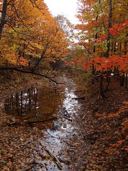 File:Forest at automn with water.jpg