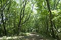 Forest in Mt.Nandai 02.jpg