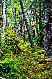 Forest on Femöre, Sweden.jpg