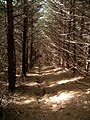 Forest path, Colquhar Brae - geograph.org.uk - 153823.jpg