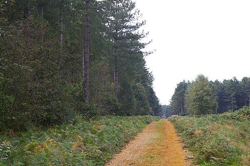 Forest track, West Bilney Wood - geograph.org.uk - 549789