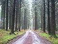 Forest track in Gunoak Wood - geograph.org.uk - 1763554.jpg