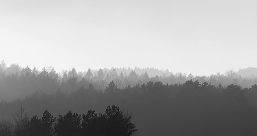 Forested hills in Lysekil in fog - wide - B&W.jpg