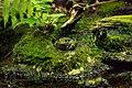 Frog (231325615).jpeg