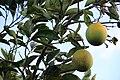 Frutas em Bom Jesus da Lapa, 2013.jpg