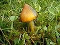 Fungi44.JPG