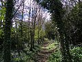 GOC Willian & Weston Hills 023 Footpath in woods (20565424828).jpg