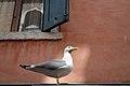 Gabbiano Veneziano - Venice, Italy - April 18, 2014 02.jpg