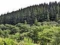 Ganllwyd - panoramio (6).jpg