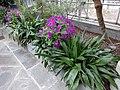 Garden Court - US Botanic Gardens 44.jpg
