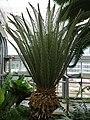 Garden Primeval - US Botanic Gardens 08.jpg