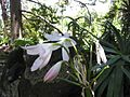 Gardenology.org-IMG 9672 rbgm10dec.jpg