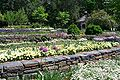 Gardens16.jpg