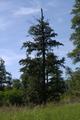 Gemuenden Ehringshausen Feldatal Felda damaged deciduous tree q.png