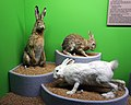 Geneva Natural History Museum - animals.jpg