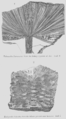 Geology and Mineralogy considered with reference to Natural Theology, plate 64.png