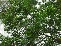 Giardino di Ninfa 144.jpg