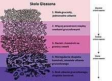 wikipedia prostata psa wert