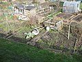Gledhow Valley Allotments 18 March 2019 4.jpg