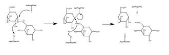 Glycogen debranching enzyme - Image: Glycosidase mechanism