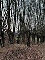 Gmina Koprzywnica, Poland - panoramio (8).jpg