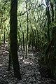 Gorges de l'Ardèche - img 42244.jpg