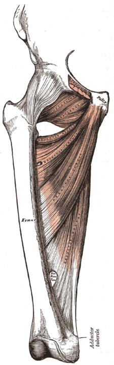 Foramen ischiadicum minus
