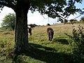 Grayson Highlands State Park-Ponies.jpg