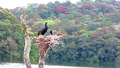 Great Indian Cormorant Chicks Await Mother.png