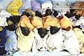 Greyheadedflyingfoxbabies2008canungra.jpg
