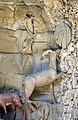 Grotta degli animali, sx, scuola del tribolo, capra.JPG