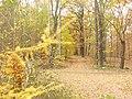 Grunewald - E-Gestell - geo.hlipp.de - 30293.jpg