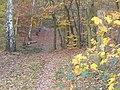 Grunewald - Waldweg (Woodland Path) - geo.hlipp.de - 30286.jpg