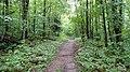 Guinea Pond Trail along former logging railroad grade, August 2016.jpg