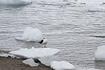 Gull (24660040901).jpg
