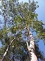 HK CWB 銅鑼灣 Causeway Bay 維多利亞公園 Victoria Park tree trunk n green leaves December 2019 SSG 15.jpg