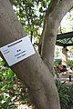 HK CWB 高士威道 Causeway Bay Road 維多利亞公園 Victoria Park tree Sept 2017 IX1 31.jpg