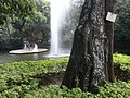 HK Kln Park Cassia Fistula Golden Shower tree view fountain pool visitors Oct-2012.JPG