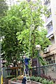 HK SYP 西營盤街道 Sai Ying Pun 居仁里 Kui Yan Lane 第三街遊樂場 Third Street Playground trees workers July 2017 IX1 01.jpg