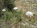 Hadassah Trail P1150483.JPG