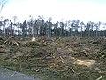 Handewitter Forst nach Sturm Xaver 2014.jpg