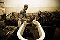 Handmade cigar production. Manufacture worker. Tabacalera de Garcia Factory. Casa de Campo, La Romana, Dominican Republic (2).jpg